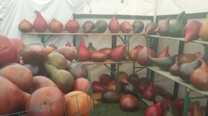 Brimfield is gourd-geous.